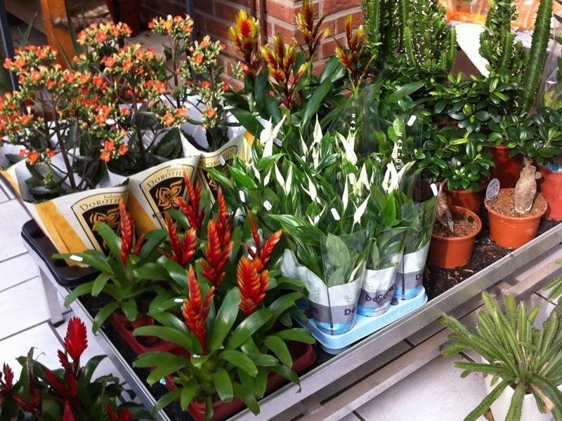 Zimmer  Und Topfpflanzen
